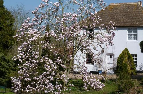Snaptrip - Last minute cottages - Inviting Aylesham Rental S10369 - EK196 magnolia in bloom