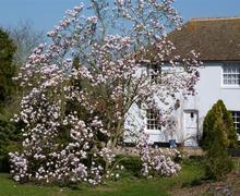 Snaptrip - Last minute cottages - Inviting Aylesham Rental S10369 - EK196 magnolia in bloom