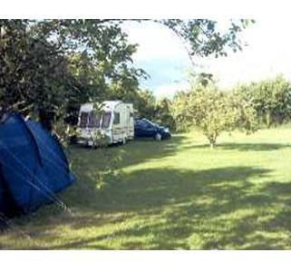 Orchard House Camp Site Spacious pitches for tents, caravans and motorhomes.
