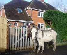 Snaptrip - Last minute cottages - Adorable Brockenhurst Cottage S58874 - donkeys 2