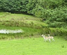 Snaptrip - Holiday cottages - Luxury Coniston And Grizedale Cottage S18440 -