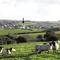 Snaptrip - Last minute cottages - Charming Crackington Haven Cottage S34550 -