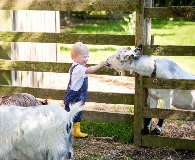 Tredethick Farm Cottages Animal feeding