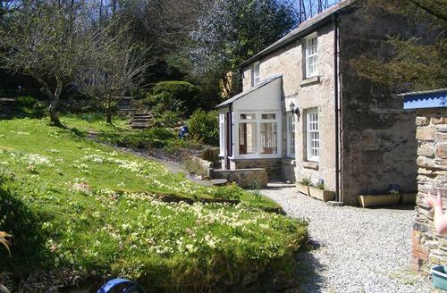 Snaptrip - Last minute cottages - Luxury North Cornwall Rental S26581 - Westside Cottage with primulas
