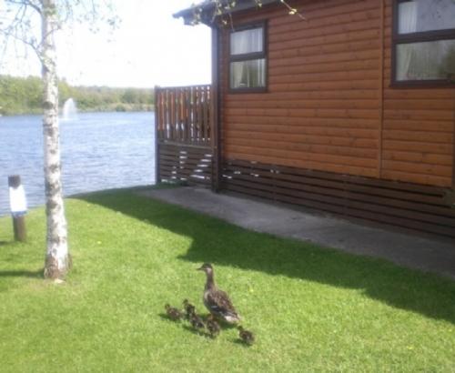 LAKESIDE LODGE Lakeside Lodge, South Lakeland Holiday Village, Carnforth, Lakes cottage holidays