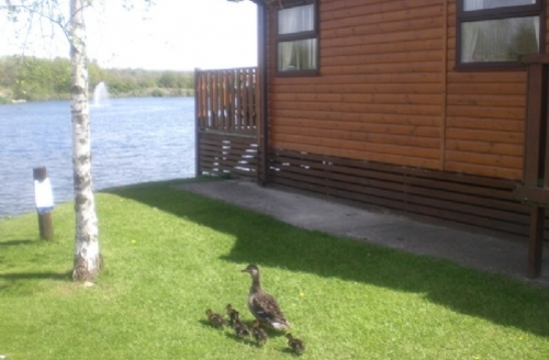 Snaptrip - Last minute cottages - Captivating Carnforth Lodge S450 - Lakeside Lodge, South Lakeland Holiday Village, Carnforth, Lakes cottage holidays
