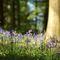 Deerpark Lodge, Staunton Harold, Ashby-de-la-Zouch Bluebells in the woods