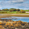 Snaptrip - Last minute cottages - Cosy Dumfries & Galloway Cottage S104788 - bluebells 052