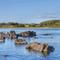 Snaptrip - Last minute cottages - Quaint Dumfries & Galloway Cottage S104613 - Boat and flowers 009
