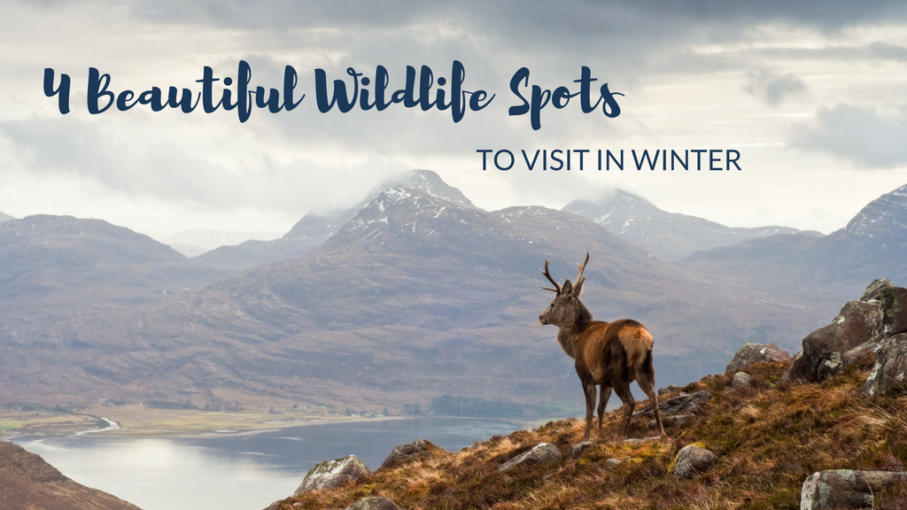 Four beautiful British wildlife spots to visit in winter
