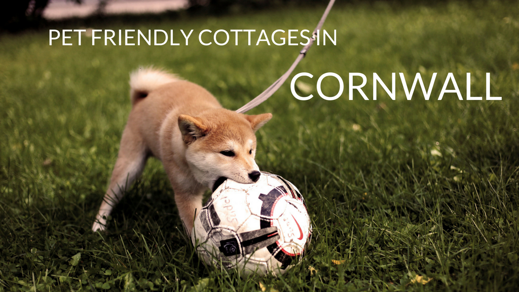 Last Minute Pet Friendly Cottages in Cornwall