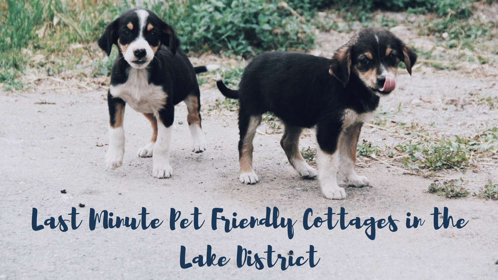 Last Minute Pet Friendly Cottages in the Lake District