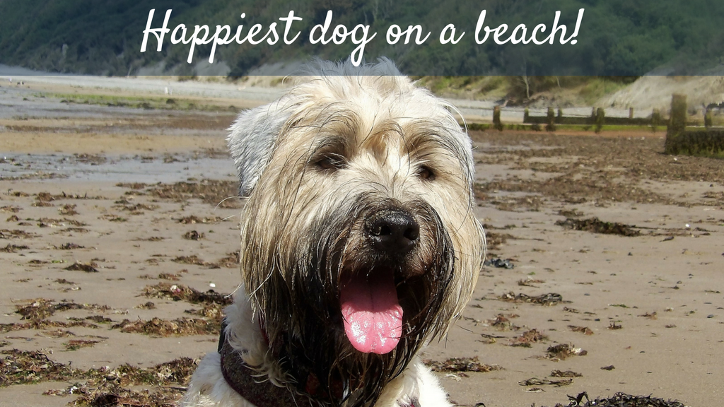 UK's happiest dog on a beach: the finalists