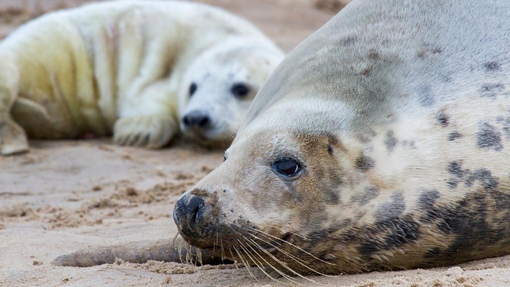 An image showcasing wildlife at Blakeney, one of Norfolk's best nature reserves