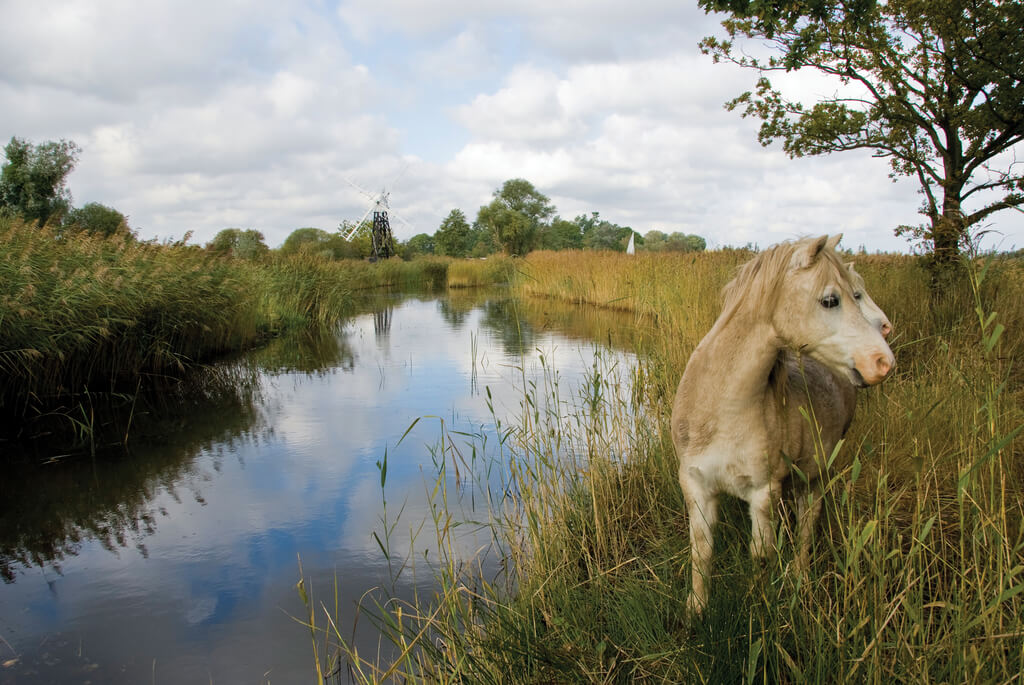 A pony by one of the waterways in the Broads that everyone should visit