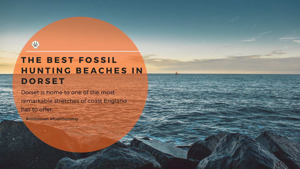 The best fossil hunting beaches in Dorset