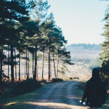 New Forest travel guide
