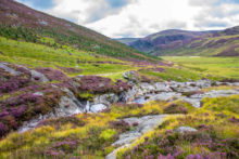The amazing scenery is one of the 5 reasons you need to visit Cairngorms National Park