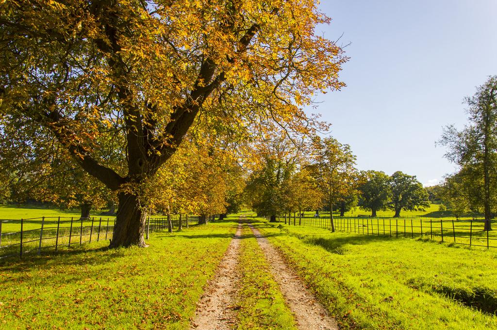 A path through the New Forest, near Brockenhurst