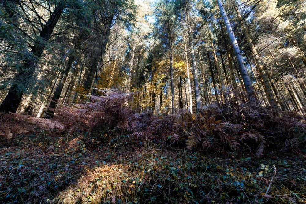 Cardinham Woods Cornwall