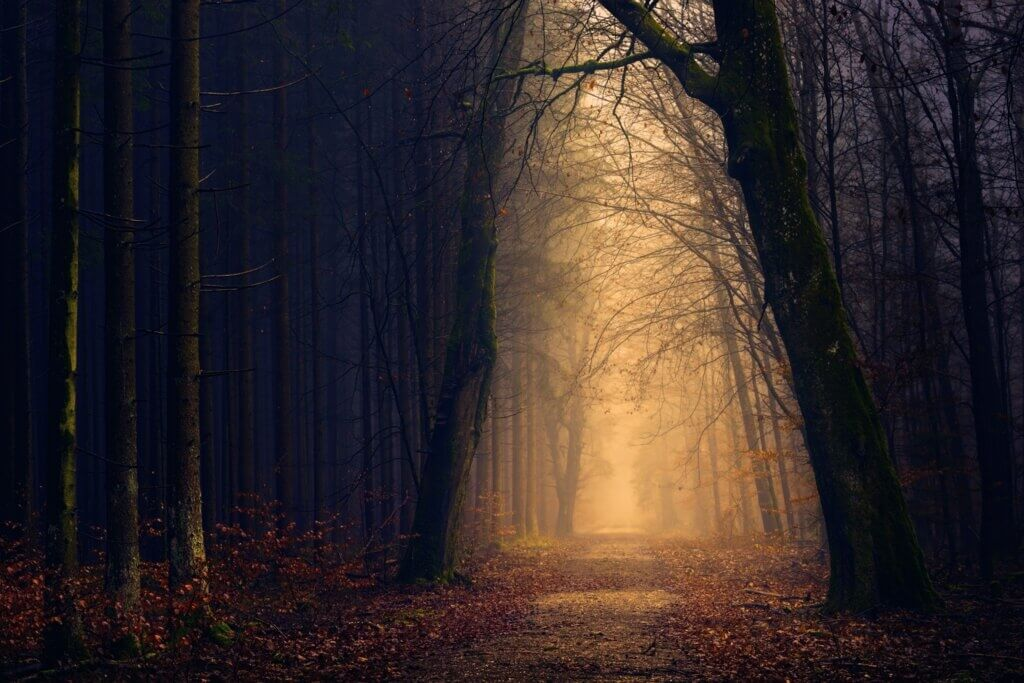 Walk the spooky woods during your halloween family break