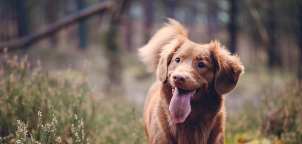 Last-minute Dog Friendly Cottages in The  Lake District  - Save up to 60%