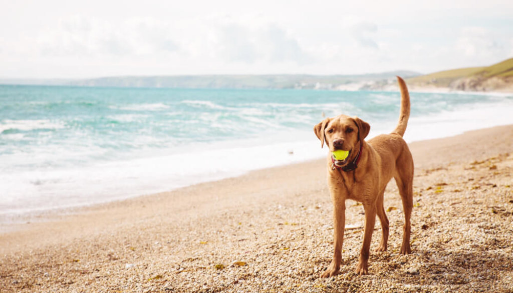 Things to do in Cornwall with dogs