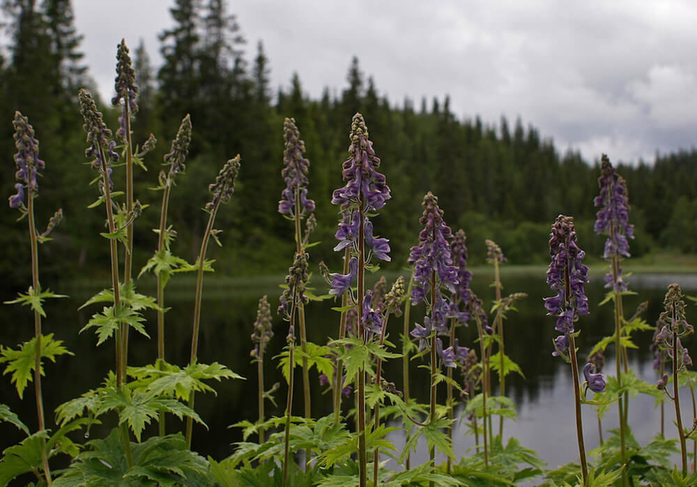 How to hike safely, poisonous plants