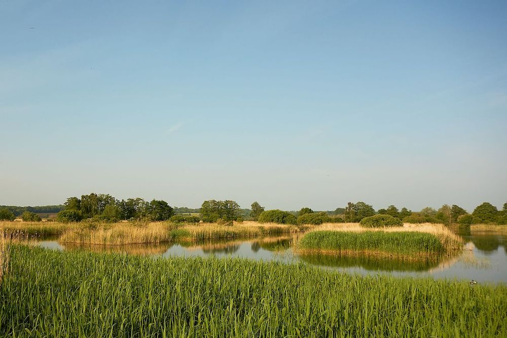 Shapwick Heath National Nature Reserve