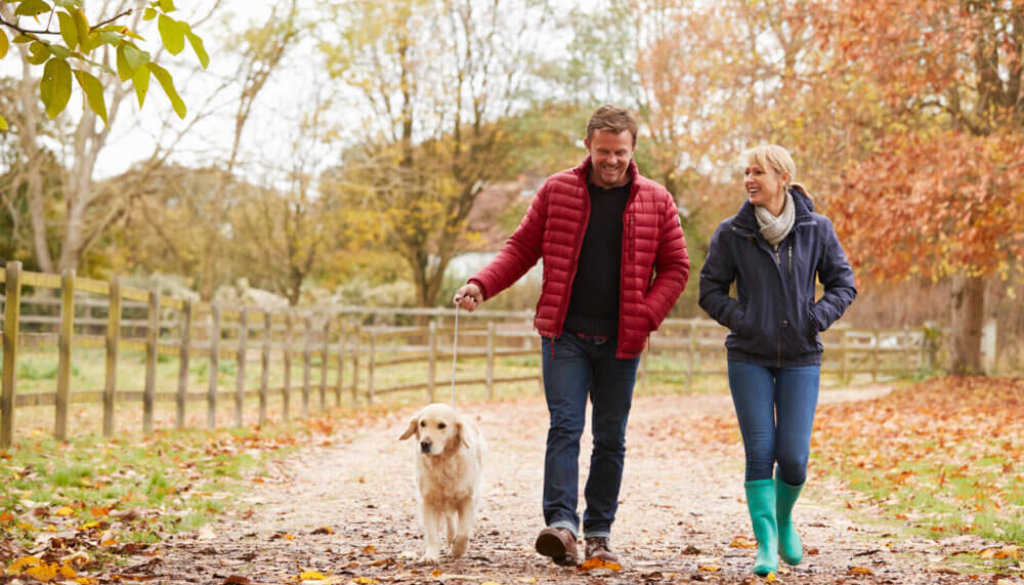 Things to do in Devon with dogs